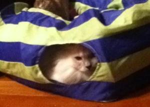 Jaran in crinkle tunnel