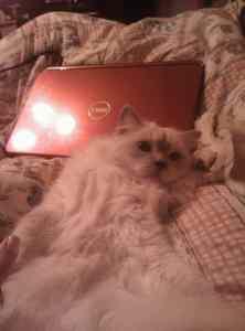 floppy kitty