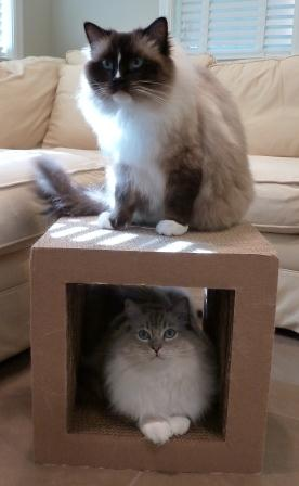 Cardboard Cat Scratcher Cube by kittyblock and Charlie and Trigg