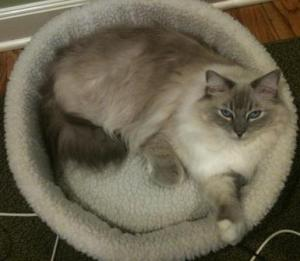 Trigg in the AlphaPooch Siesta Cat Bed Natural