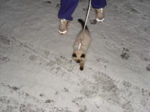 rudi walking on a leash
