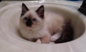 Amos every morning in the bathroom sink2