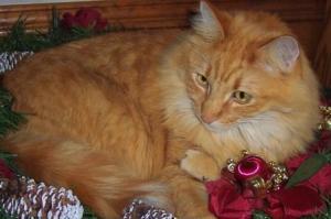 Aslan (deceased) crippled and chronic arthritis