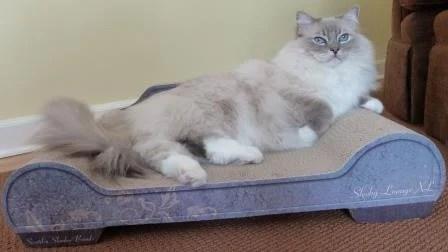 Trigg on Brawny Cat Sleeky Lounge XL Floppycats
