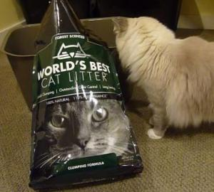 World's Best Cat Litter Forest Scented Review