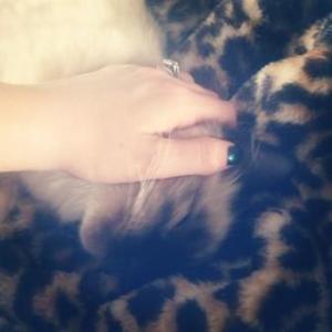 Hendrix - Ragdoll Kitten of the Month