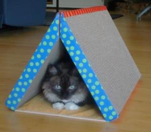 Bella in the  New Fold Away Scratching Tunnel
