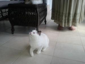 3Popeye_1st visit breeder_4 months