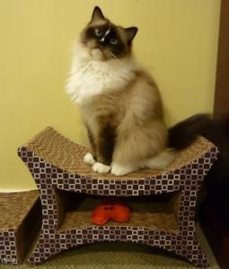 Imperial Cat Perch 'n Lounge Tower Scratch 'n Shape Scratcher Review2