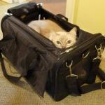 Sherpa Cat Carrier – Ultimate Bag on Wheels Review
