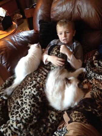 My grandson Mason getting love from Moch and Mitz as he wasn't feeling well. Mason gentle pets his tail and Moch lays there purring in approval.