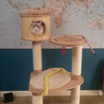 Large Cat Cat Tree in the UK