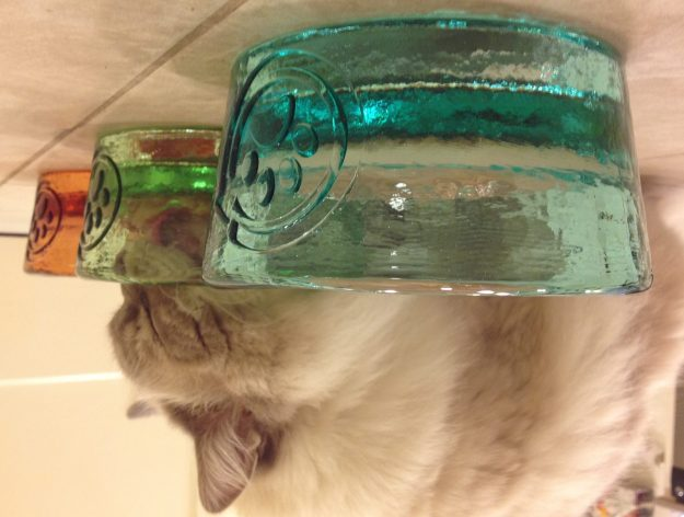 PawNosh Glass Pet Food Bowls Colors Aqua Celery and Tangerine with Ragdoll Cat and Floppycats