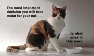 Feline_Nutrition_Important