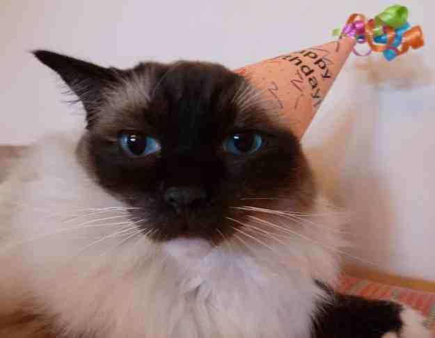 Happy 10th Birthday, Caymus!