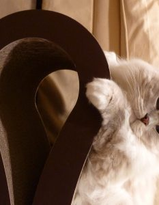 PetFusion Cat Scratcher Lounge - Deluxe Review by Floppycats 4
