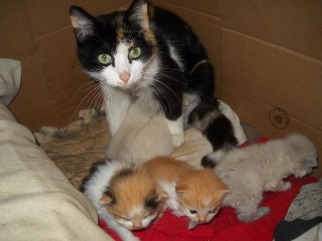 Momma Cat