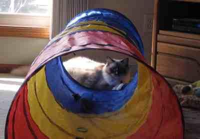 Summer Hot Deals Kids Play Tunnel Pop Up Playhouse Cat Tunnel