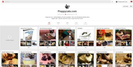 Floppycats on Pinterest