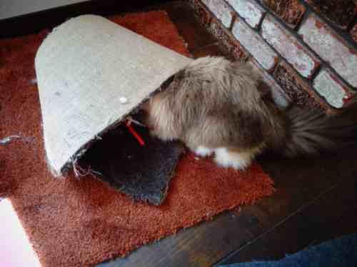 Gatsby checks out the carpet