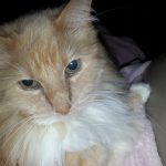 Jelly Belly – Floppycat of the Week