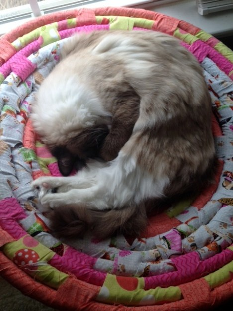Perry Ragdoll of the Week  ROTW 9 Perry in his homemade cat bed