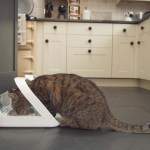SureFeed Microchip Pet Feeder 25% OFF Discount Code: HUNGRYCATS