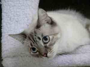 Luna - Floppycat of the Week 5