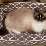 Review: Bowsers Pet Bed Urban Lounger Product Review