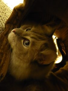 Cat Play Tunnel System - UJI Neko Pawdz Cat Tunnel System Product Review 2