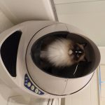 Review: Litter-Robot III Open Air Automatic Litter Box Product Review