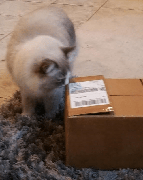 PawNosh Glass Cat Bowl Giveaway Winner Reports Back 1