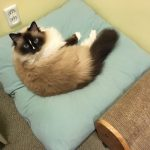 Peach Pet Provisions Pillow Bed – Charlie's New Favorite Cat Bed