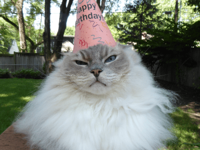 Happy 7th Birthday, Trigg!
