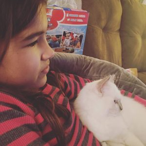 Chemo - Ragdoll Kitten of the Month 3