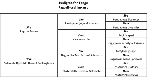Soulmate Tango's Pedigree