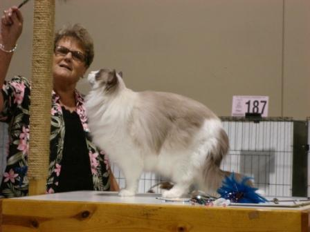 Judge Norma Placchi - Rag Time in KC Cat Show 8-9-08