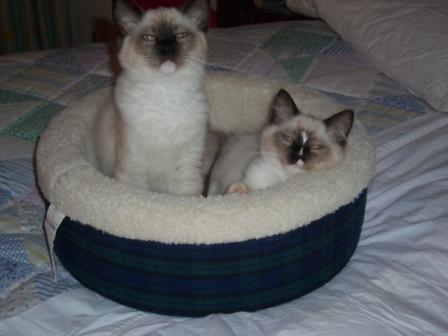 As Kittens in Bed