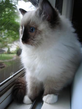Charlie in Window 10-17-09