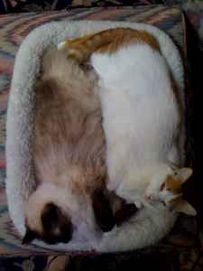 Maddie and Bodi