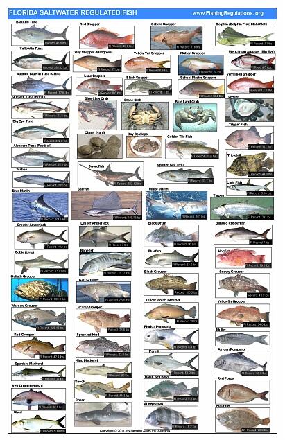 Florida fish posters