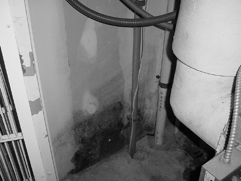 Black Mold How Bad Is It.