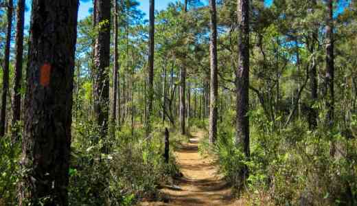 5 Things to Do in Ocala National Forest, including cutting a Christmas tree