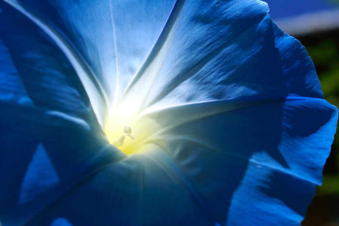 Blue Flowers Meaning - Flower Meaning