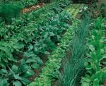 Gardening Ve Able Garden