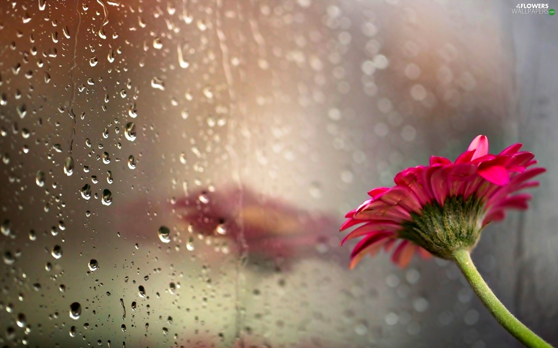 Happy New Year D Reflection Drops Gerbera Glass Colourfull Flowers