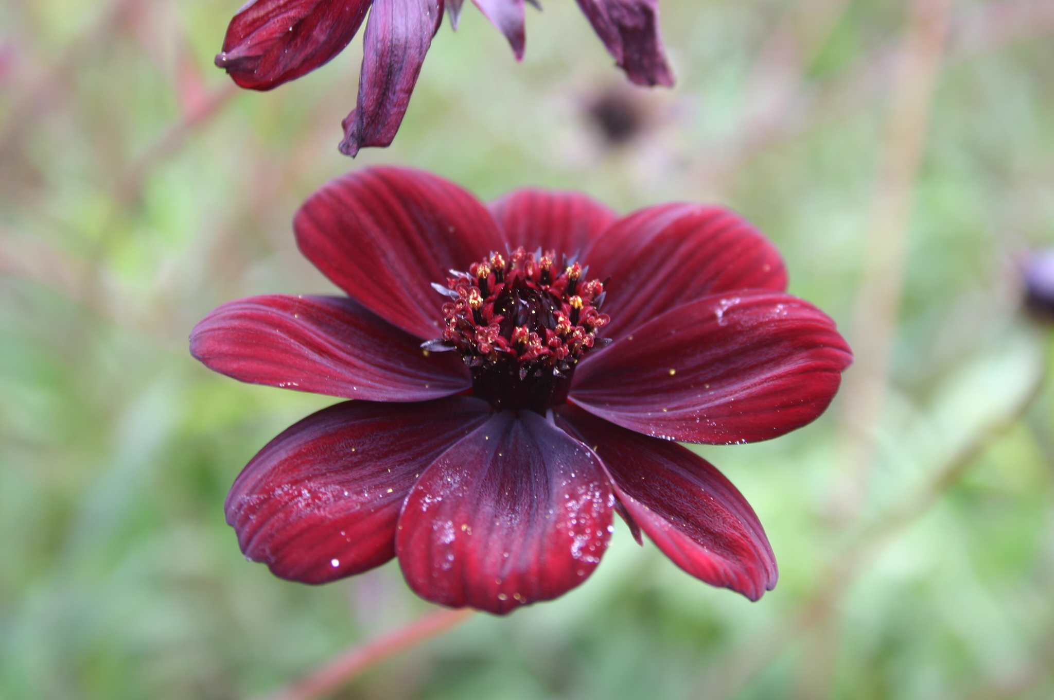 The Fall Bbc Wallpaper Rare And Endangered Flowers Flowers Org Uk