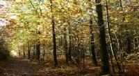FNE a publié en 2012 une plaquette d'information sur la gestion durable de la forêt en forêt publique. Cette plaquette a été réalisé avec le concours de l'ONF. Pour télécharger […]