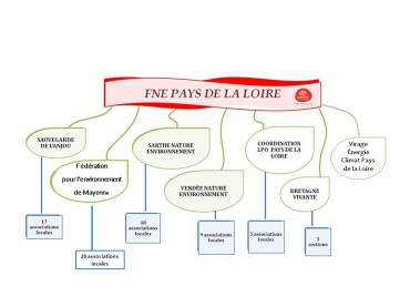 Organigramme_asso_FNE-PdL_2014