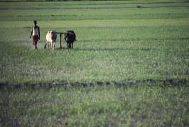 Economic Inclusion and Environmental Sustainability: Case Study Meghalaya
